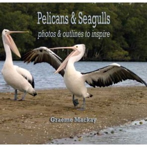 Pelicans & Seagulls: photos & outlines to inspire eBk